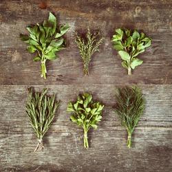 Culinary Herbs Diploma